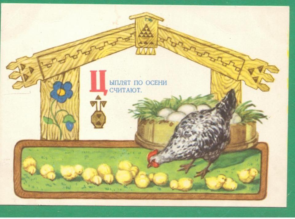 Цыплят по осени считают. Открытка 1956 года.