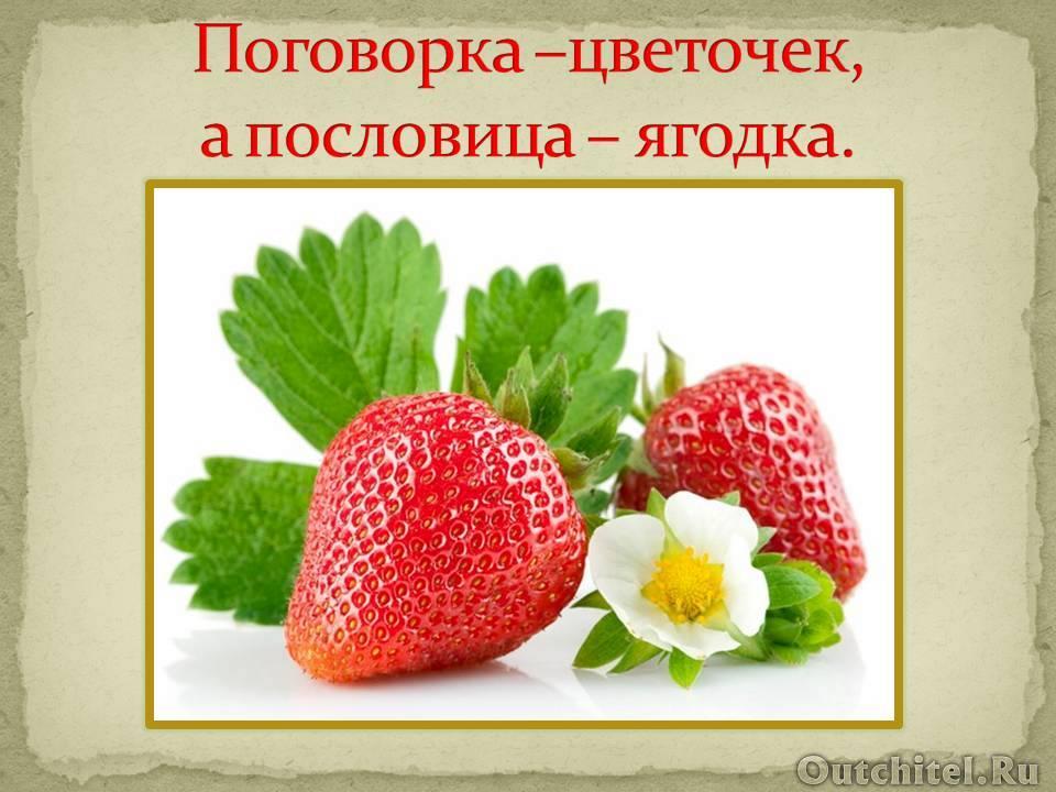 Поговорка – цветочек, пословица – ягодка